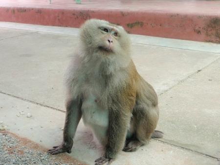 """จบทริปแล้วครับ ภาพ นัง """"โมหะนี"""" ลิงขึ้นต้นมะพร้าวที่โดนปลดระวาง เจ้าของเอามาปล่อยทิ้งที่สวนโมก สุราษฎร์นี"""